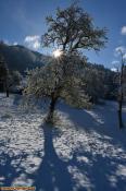 Verschneiter Baum am Marentes, Bartholomäberg