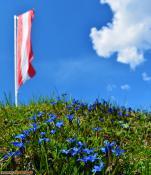 Frühlingsenzian bei der Fraßenhütte, Lechquellengebirge